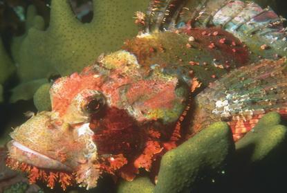 Podwodne życie w tropikach 11