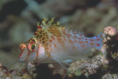 Podwodne życie w tropikach 48