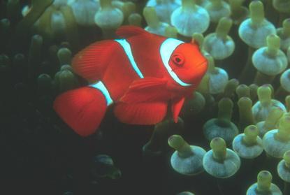 Podwodne życie w tropikach 84