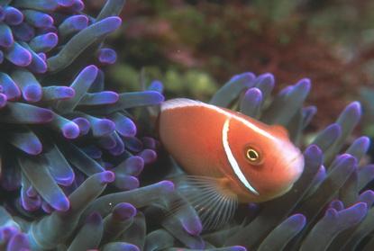 Podwodne życie w tropikach 88