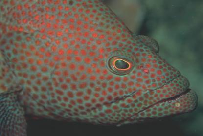 Podwodne życie w tropikach 93
