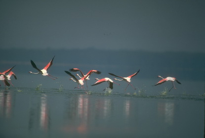 Ptaki brodzące 18