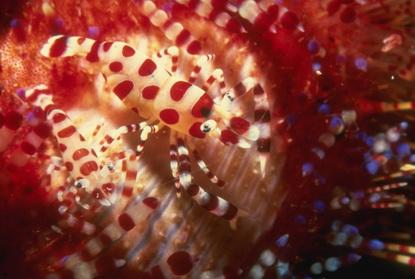 Fotografia podwodna 33