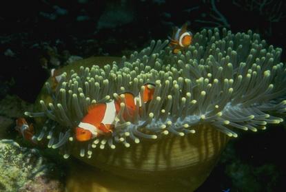 Fotografia podwodna 45