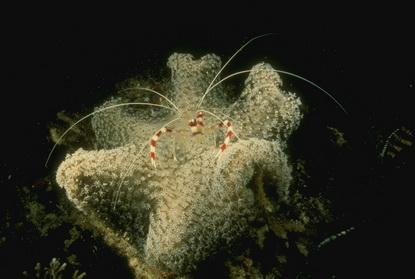 Fotografia podwodna 54