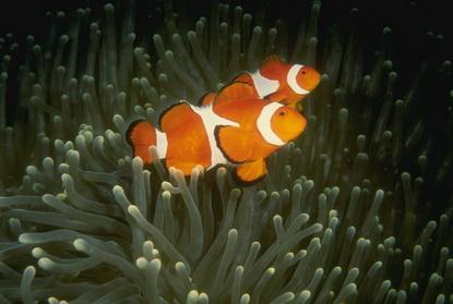 Fotografia podwodna 67