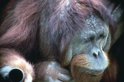 Małpy 5