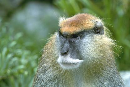 Małpy 18