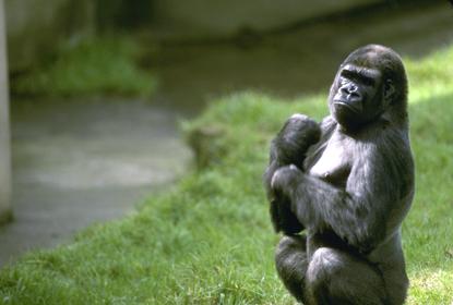 Małpy 25