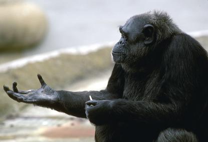 Małpy 34