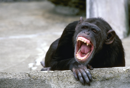 Małpy 35