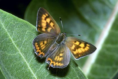 Motyle 10