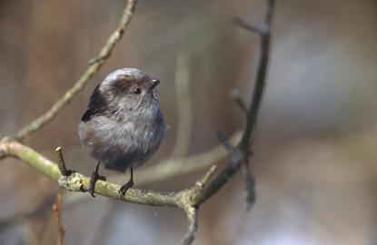 Ptaki w Polsce 5