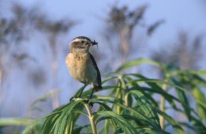 Ptaki w Polsce 6