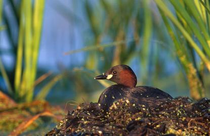 Ptaki w Polsce 7