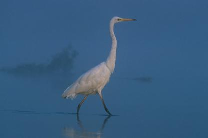 Ptaki w Polsce 8