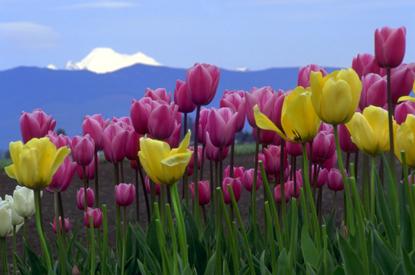 Kwiaty 1