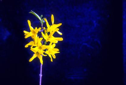 Kwiaty II 12
