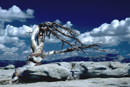 Yosemite 49