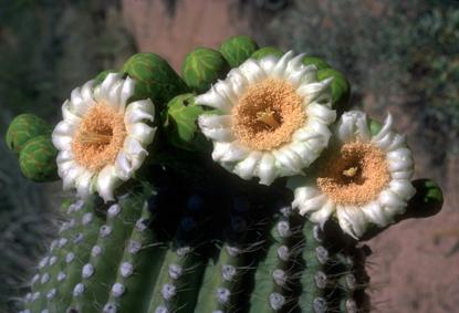 Pustynia w stanie Arizona 9