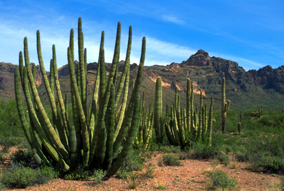 Pustynia w stanie Arizona 51