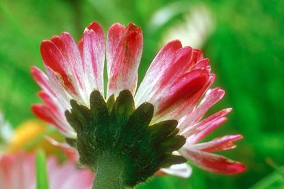 Kwiaty - makro 14