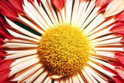 Kwiaty - makro 15