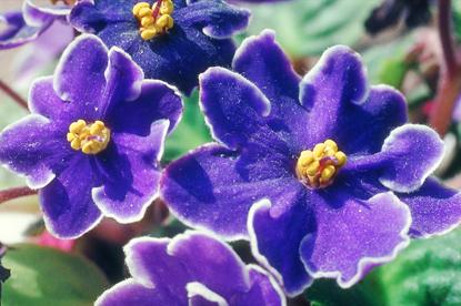 Kwiaty - makro 16
