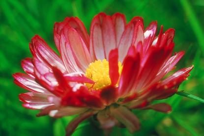 Kwiaty - makro 22