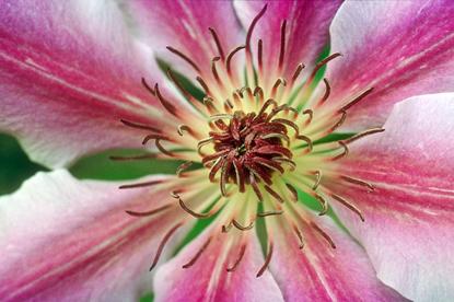 Kwiaty - makro 25