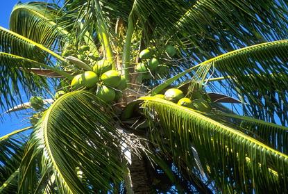 Jamajka 35