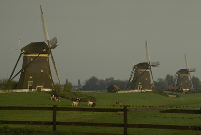 Holandia 44