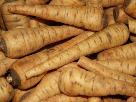 Pasternak - korzenie odmiany uprawnej. By Jonathunder (Own work) [CC BY-SA 3.0 or GFDL], via Wikimedia Commons